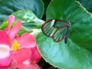 The Wings of Mackinac Conservatory is home to a surprising variety of butterflies and moths. (Cheryl Welch | Travel Beat Magazine)
