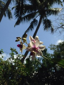 The Audubon House has oodles of orchids hanging out in trees in the garden. (Cheryl Welch | Travel Beat Magazine)