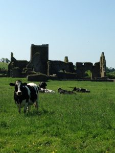 Around nearly every corner it seems there is a castle, abbey, monastery or other relic of the past. You'll usually find them in the middle of the field ... and the cows don't mind the company. (Cheryl Welch | Travel Beat)