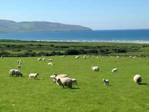 A scene during a lovely drive around the Ring of Kerry. (Cheryl Welch | Travel Beat)