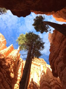 This is a view from Wall Street of the sky and surrounding hoodoos in Bryce Canyon National Park. (Cheryl Welch | Travel Beat)