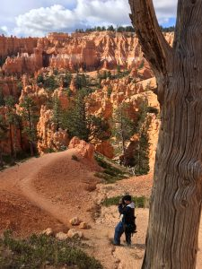 Photographers love the variety they can capture along the Navajo Trail as they exit the canyon floor and head up into the Queen's Garden. (Cheryl Welch | Travel Beat)